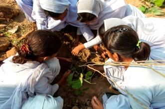 baidu-india-plants